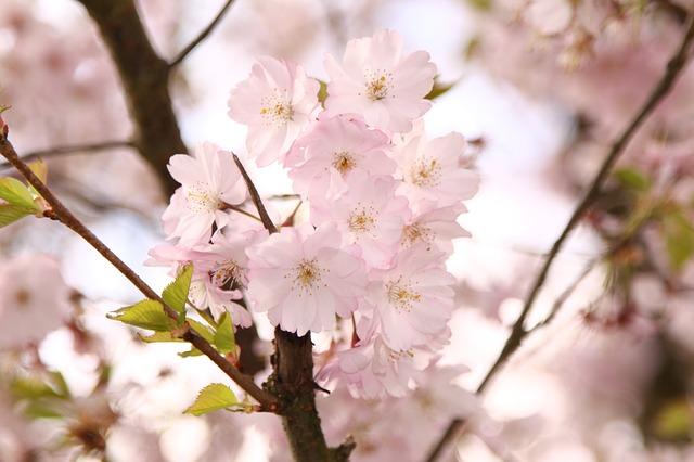 新社会人、入学などのこの時期に聞いてた春っぽい曲を集めてみた!